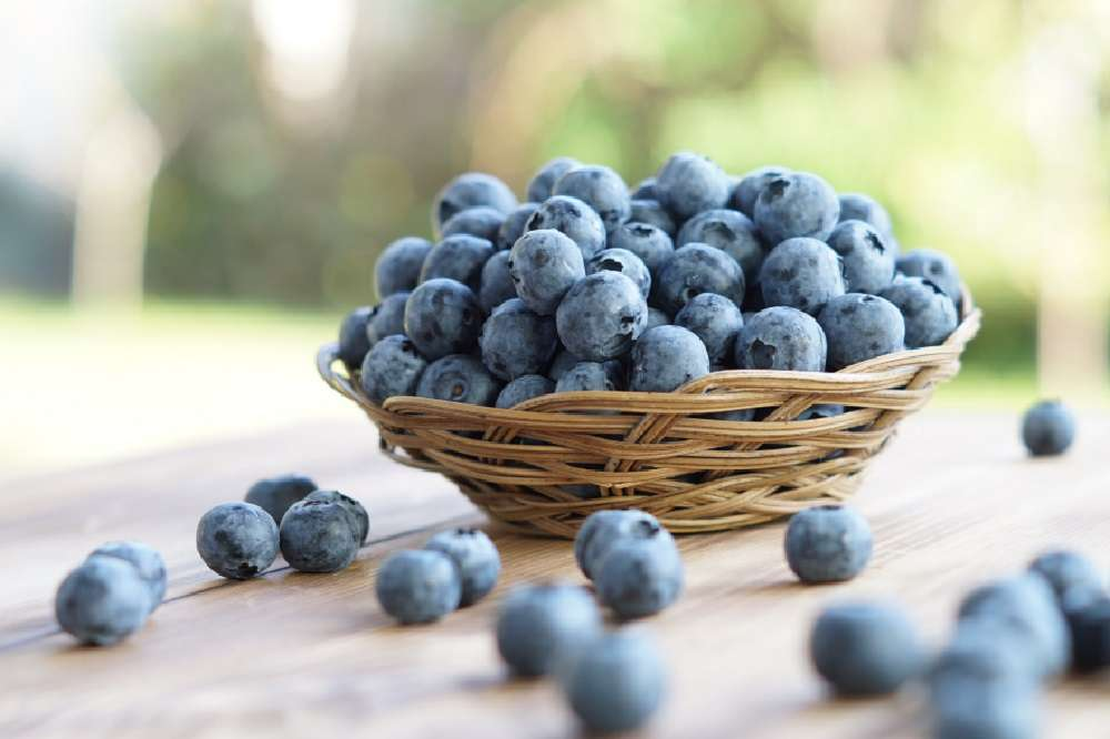 In Season: Blueberries